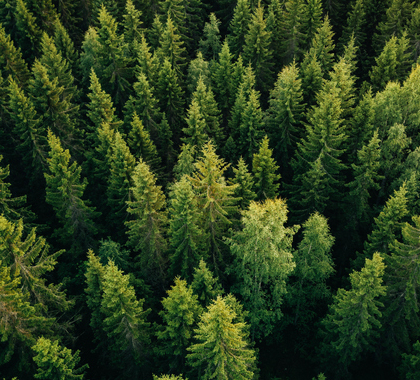 """News - Trump was Right About """"Raking"""" Finnish Forests 