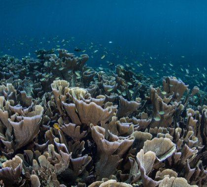 News The Biggest Climate Change Lie Of All Ocean Acidification