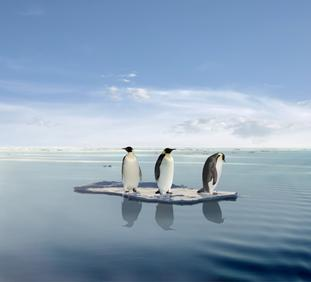 global_warming_penguins