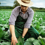 Man working in agricultural field